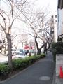 中野通り桜植え替え(新旧)