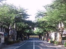 中野通り「桜」小暑(7_7)南方面