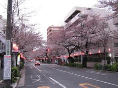 中野通り「桜」 2009.04.02-s