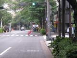 桜-2010(中野通り[剪定作業中]06.05)