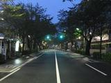 桜-2010(中野通り[南]10.01)