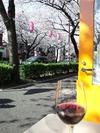 中野通り桜2012(花見中w)4.8