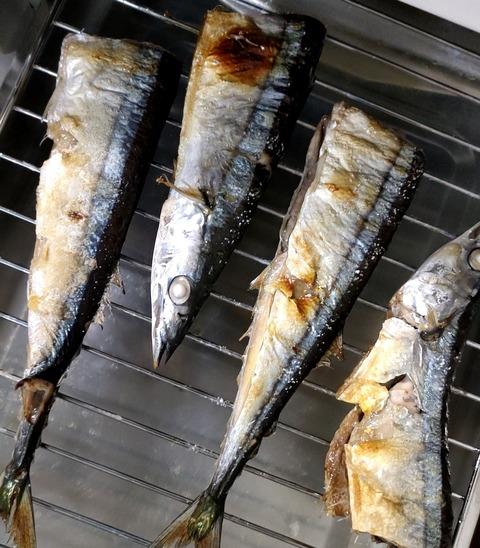 🐟秋刀魚🐟