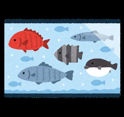 fish_ikesu