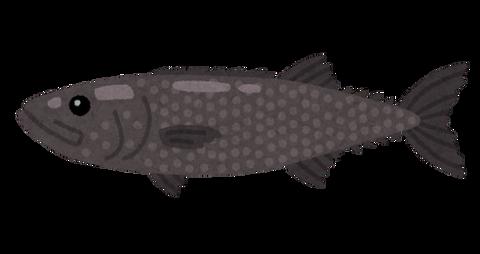 fish_baramutsu