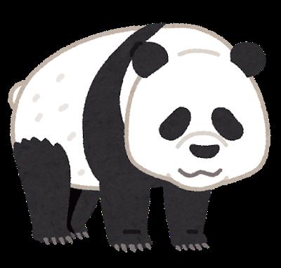 animal_bear_panda