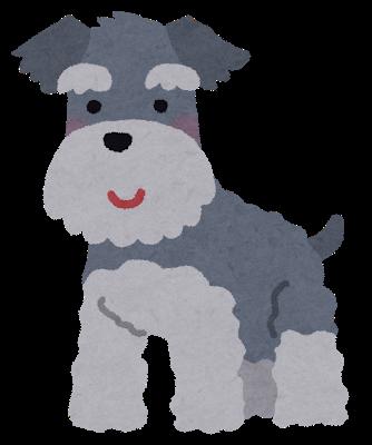 dog_miniature_schnauzer