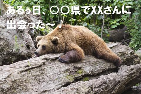 bear-1383980_1280