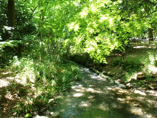 境内の小川