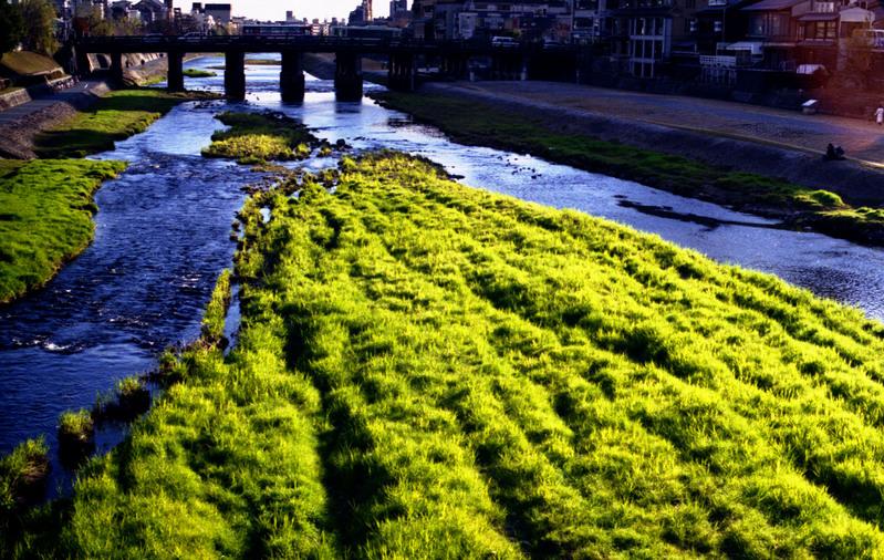 黄緑色の草達