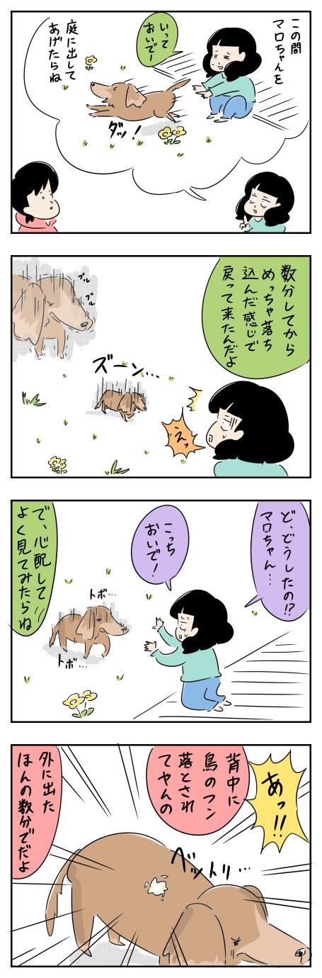 マロちゃんの憂鬱