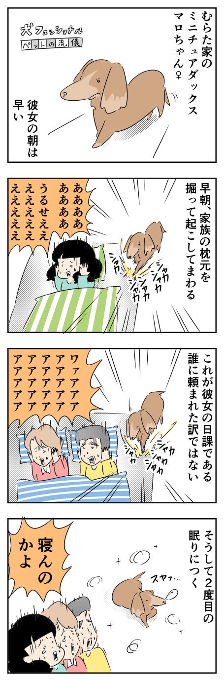 村田家のミニチュアダックス