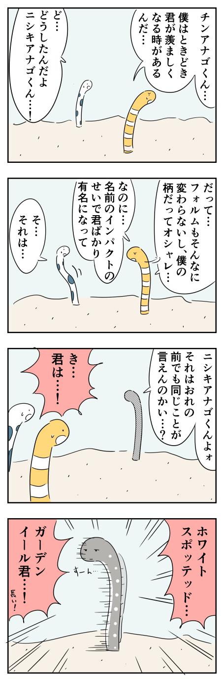 チンアナゴくん②