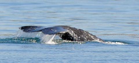 20111226__db_whale_watch_horiz_01