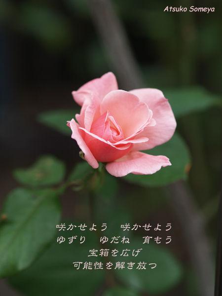 ライブ情報☆1月