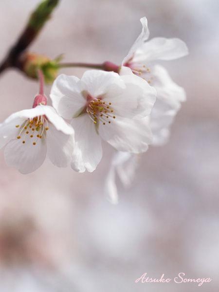 ライブ情報☆2014.4月