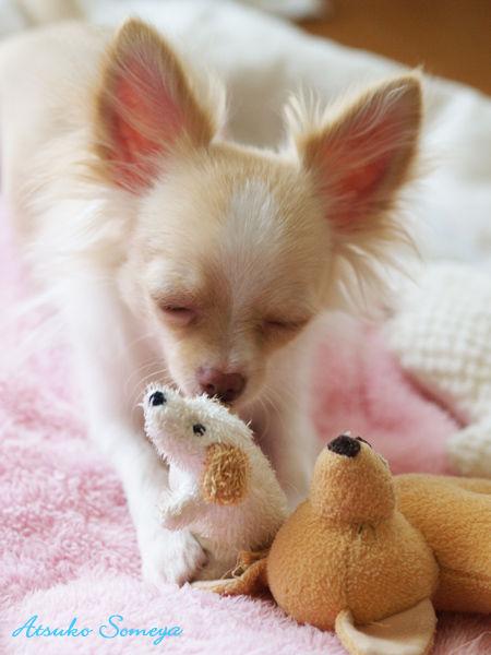 うちの癒し犬