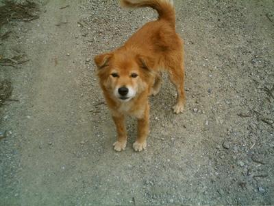 山の神にいた犬(1)