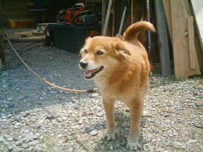 山の神にいた犬(5)