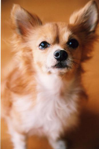 たくとのこと (6)「犬が教えてくれること」