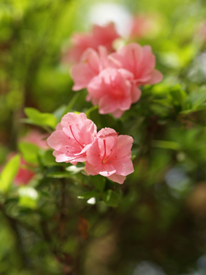 お花になって咲いてごらん