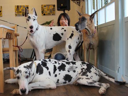 犬と楽しむコンサート in シェ・ポール