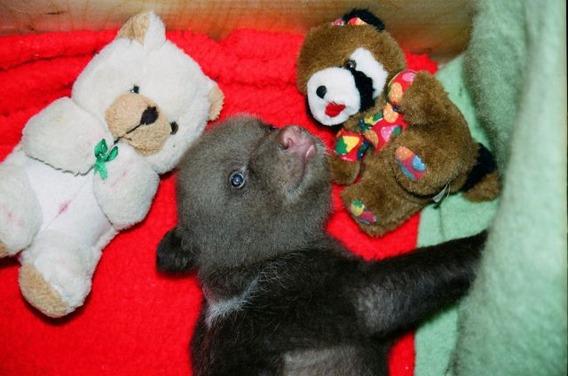 latvian_woman_raises_wild_bear_cub_alongside_her_children_640_10