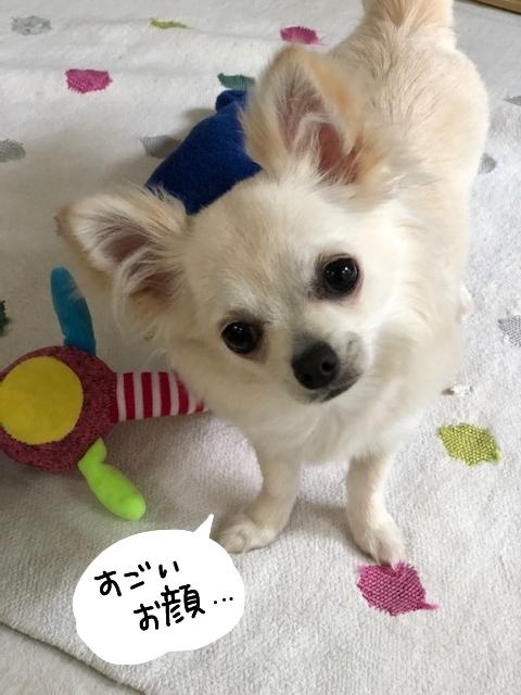 ひっぱりっこ_bak