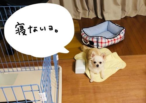 アタ台風2