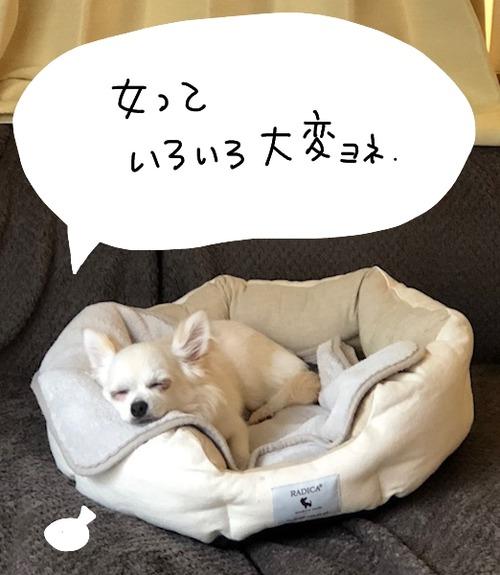 ひーと頭_bak