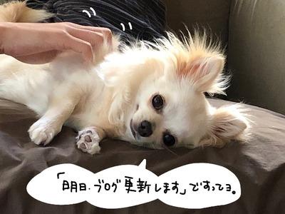 IMG_3026_bak