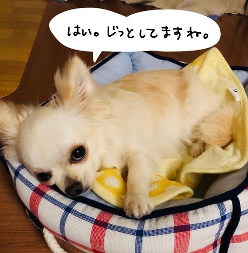 アタ台風4