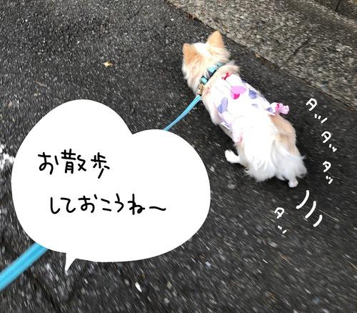 アタ台風6