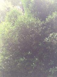Shrine and tree_171007 (188x250)