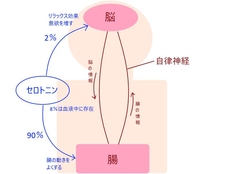 セロトニン分泌 画像1