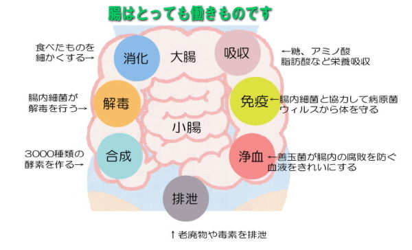 腸の働き 画像2