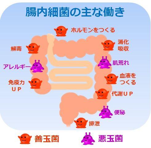 腸内細菌の働き 画像1