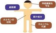 コレステロールの役割 画像1