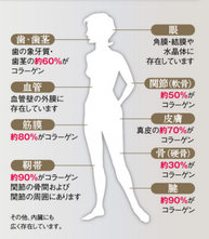 身体のコラーゲン部分 画像1