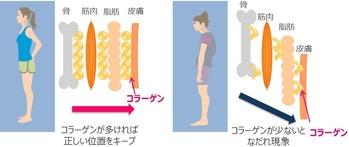 コラーゲン摂取の身体変化 画像1