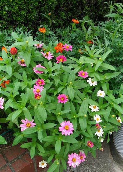 色とりどりの花