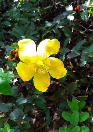 夏に咲く黄色の花