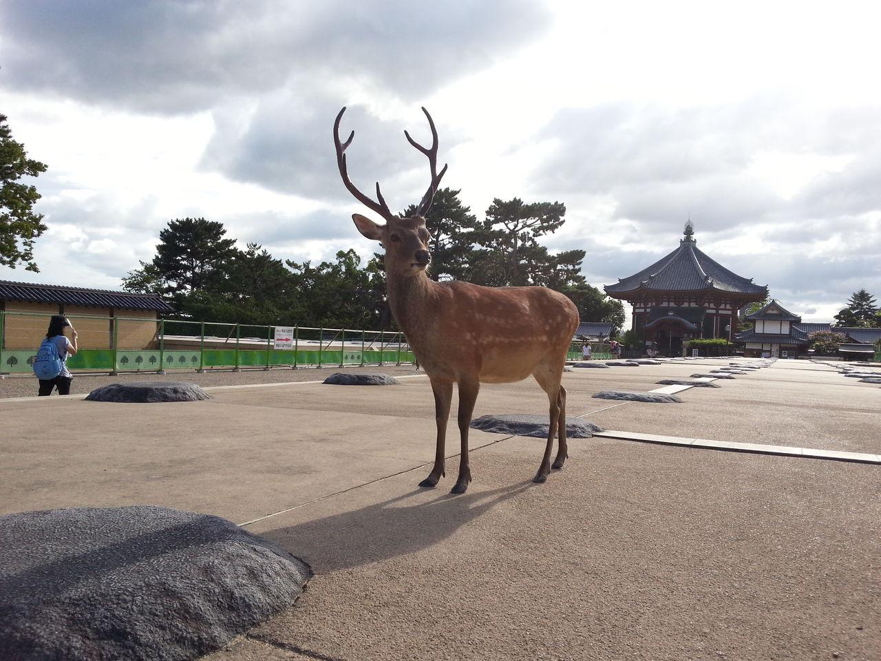 鹿の立つ姿がとてもかっこいい