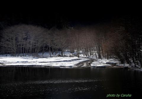 1-川べりの林