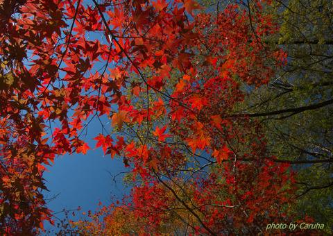 真っ赤な秋に