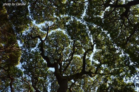 ヤマモモの木の下で