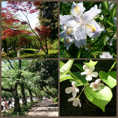 Ueno Flowers