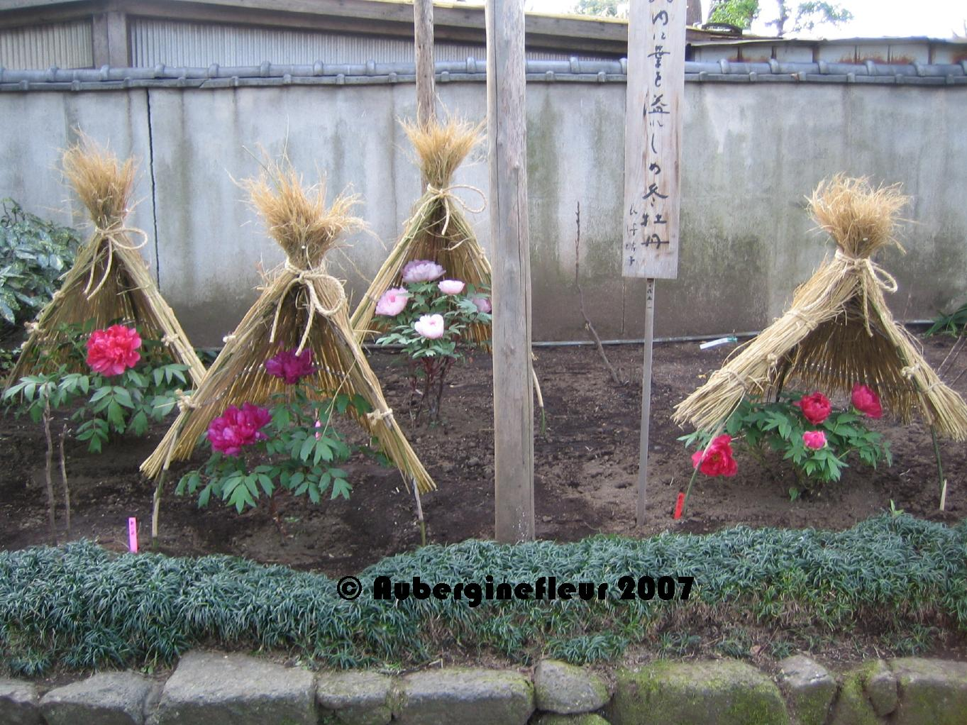 今古ジャパン af u0027s japan now u0026 then 今古ジャパン day walks