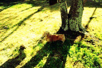 桜の木の下のコロン