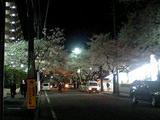 夜桜20080330